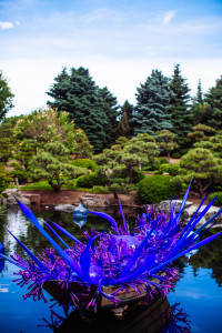 Chihuly glass at the Denver Botanic Gardens 2014. Photo Credit: Urban Safari Photography.